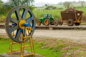 Zuckerrohrernte in  Costa Rica