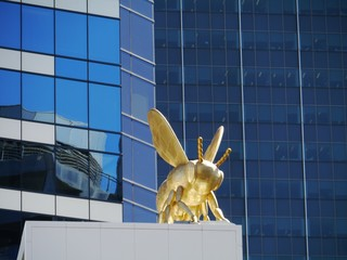 A bee in the business center of Melbourne in Australia