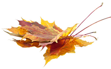 autumn sheet