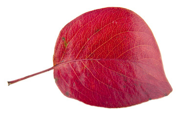 red autumn sheet