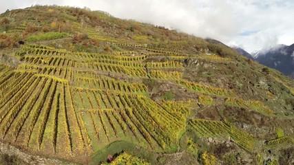 Valtellina - Sondrio - vigneti del Sassella