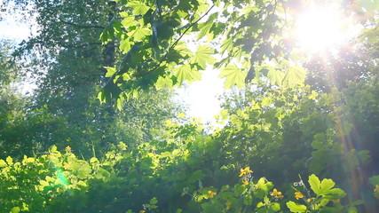 Sun breaking through green leaves