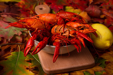 Crawfish on colorfull autumn leaves