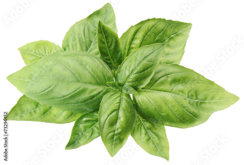 canvas print picture Green basil leaves isolated on a white.