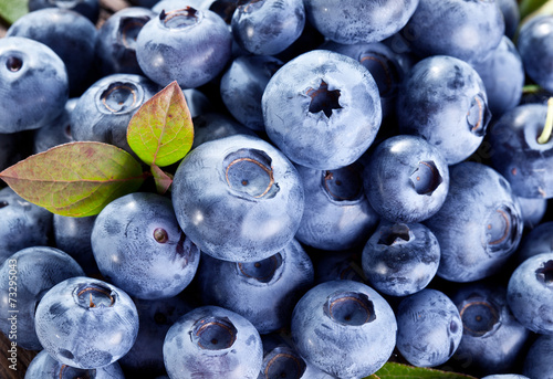 canvas print picture Ripe blueberries - food background. Macro shot.