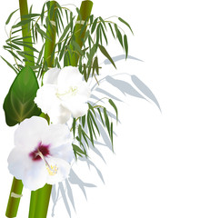 white flowers on green bamboo
