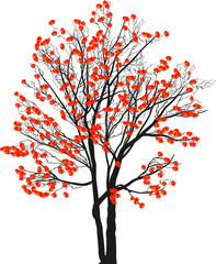 red blossoming tree isolated on white