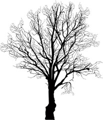 black bare oak isolated silhouette