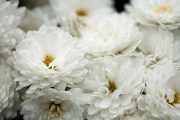 Fine art of close-up , flowers