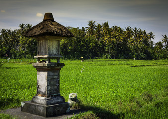 Balinese rice field agricultural landscape