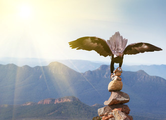 Wedge-tailed Eagle landing on rock cairn on mountain top