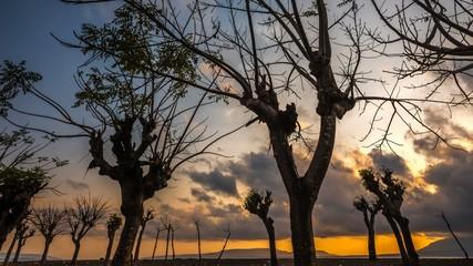 Scary tree sunrise time lapse