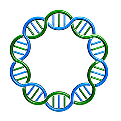 DNA circle Strand and Seamless
