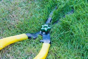 Scissors cut grass put in garden