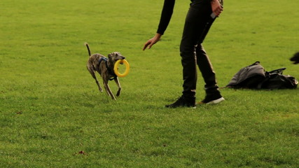 Dog brings back doughnut toy to man, playing in park