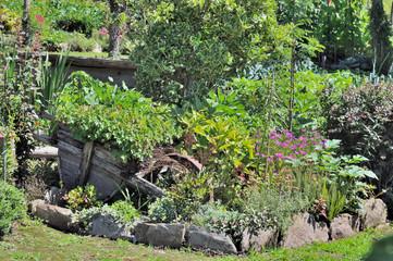 vieille brouette dans jardin