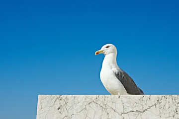 Seagull sitting on marble stone on blue sky