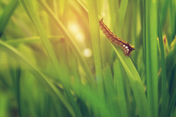 Raupe im Gras