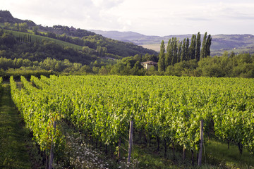 Chianti region, Tuscany, panorama. Color image