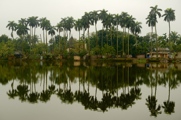 Palms and reflections in Puthia, Bangladesh.