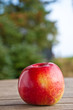 canvas print picture - Ein Apfel