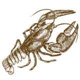 Engraving woodcut illustration of crayfish on white background