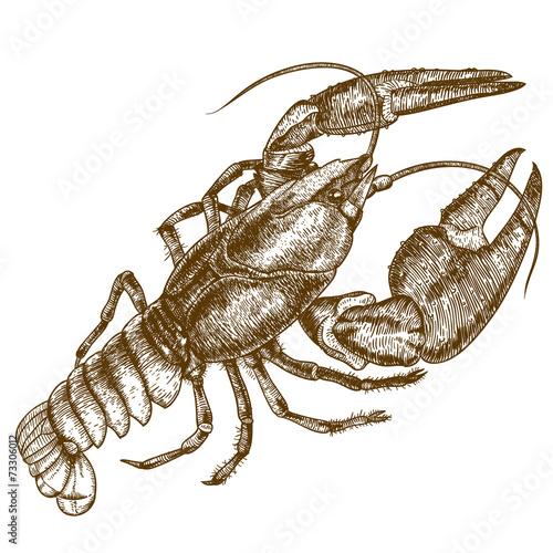 Engraving woodcut illustration of crayfish on white background - 73306012