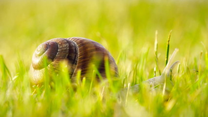 Slug in grass, macro