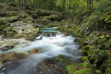 torrente nel bosco