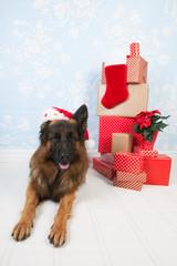 German shepherd dog for Christmas