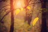 Autumn leaf on branch at sunset
