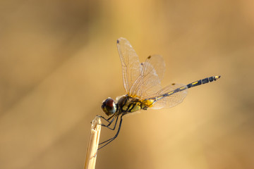 Holding of Dragonfly in natural.