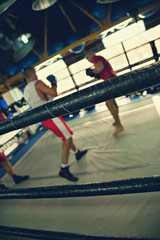 Two Boxers At Training