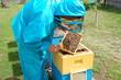 Obrazy na płótnie, fototapety, zdjęcia, fotoobrazy drukowane : пчелы