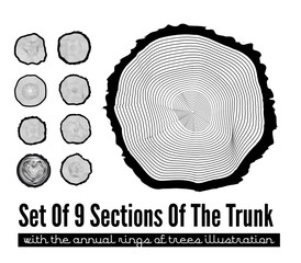 Cross section of the trunk