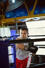 Boxer At Training