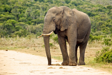 An elephant standing on a gravel road