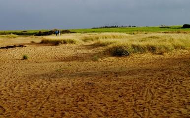 Dünenlandschaft auf Amrum