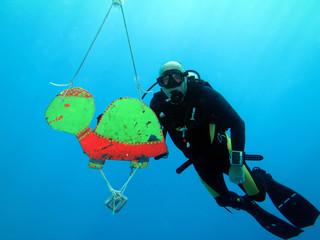 Taucher an Blech-Schildkröte
