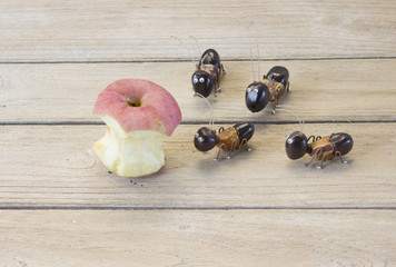 the ants want to eat apple