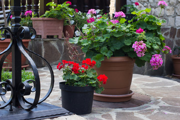 Small garden with red and violet petunia in flowerpots