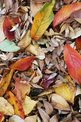 Fallen leaves of colorful background