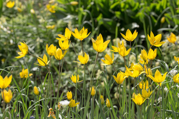 yellow and green garden