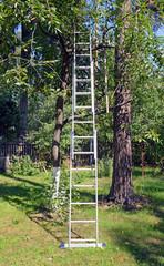 Трехсекционная лестница-стремянка около дерева