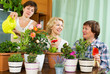 pensioners  and girl  caring for  plants