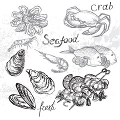 Hand drawn seafood on a white background