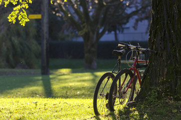 Two bicycle, parked in a park