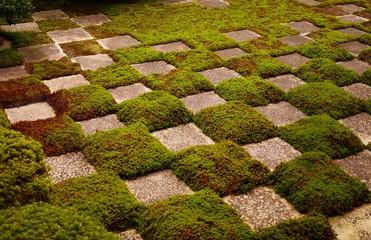 タイル状に配置される苔