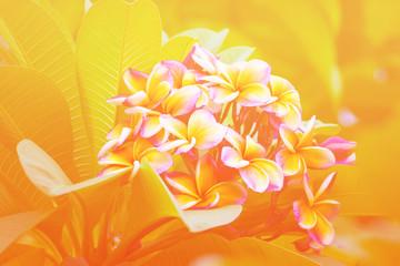 Flowers in pastel styles.
