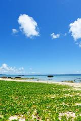 美しい海岸と爽やかな空